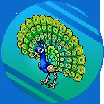 [ALL] Immagini Habbo Estate Summer 2018 Spromo_sum18_peacock
